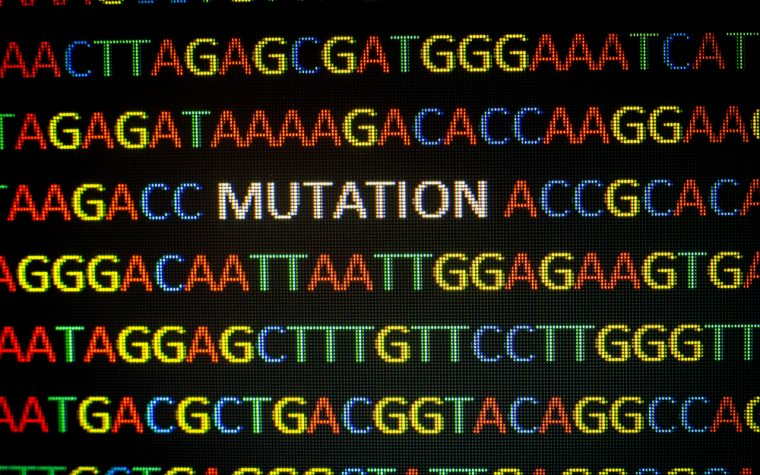 CMT4B2 disease mutations