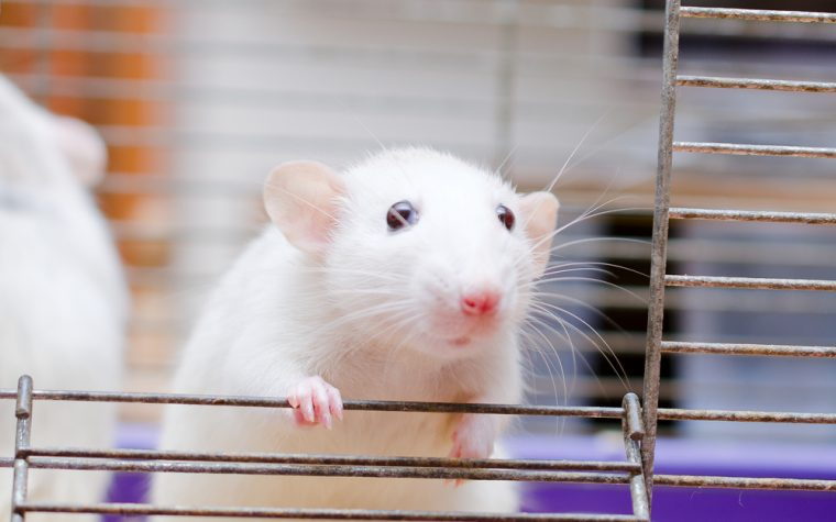 CRISPR/Cas9 Treatment Can Improve Nerve Functioning in Mouse Model of CMT1A, Study Suggests