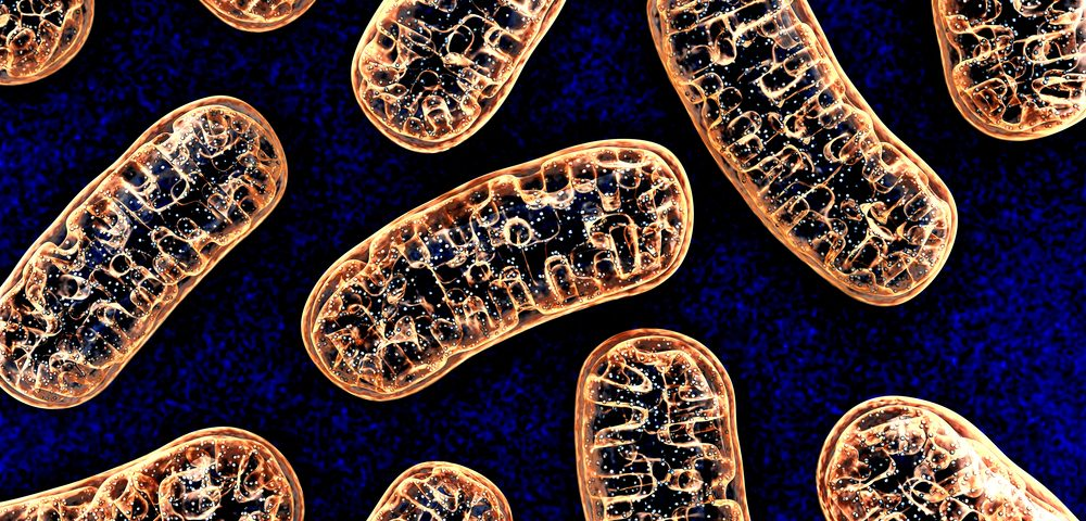 Eating for Mitochondrial Health for CMT Patients: A Nutritionist's View