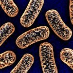 mitochondria health, eating