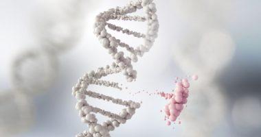 PMP22 gene copy in CMT1A