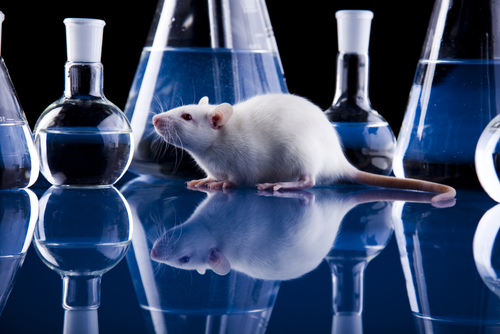 #AANAM – Gene Therapy Treats CMTX Even After Disease Onsest, Mouse Study Suggests