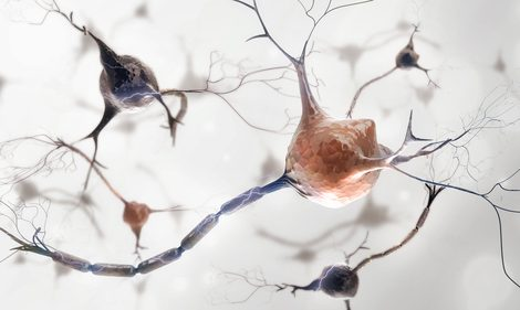 Problems with Mitochondria of Neurons May Underlie CMTX6, Study Finds
