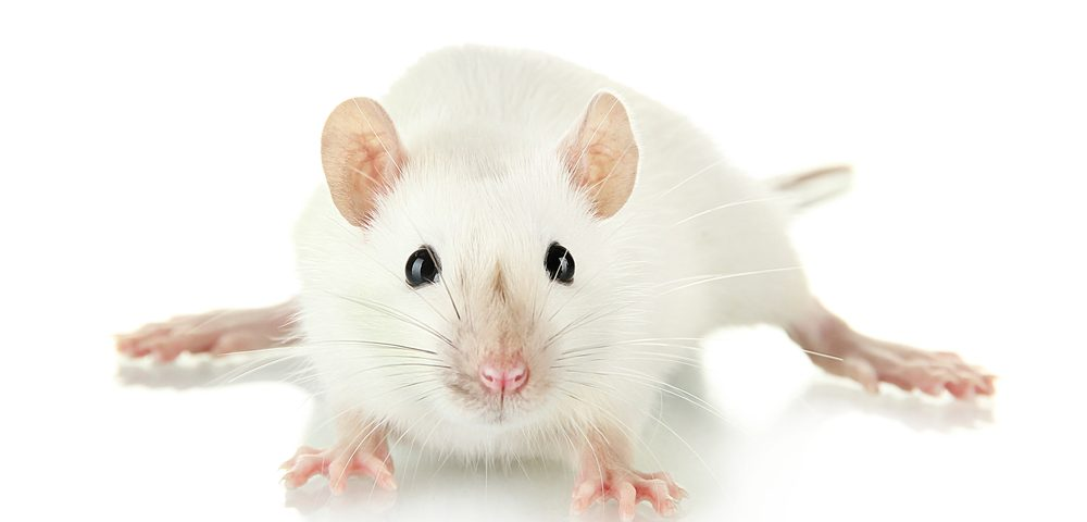 DI-CMT Type B Mouse Model Reveals Features of Muscle Damage