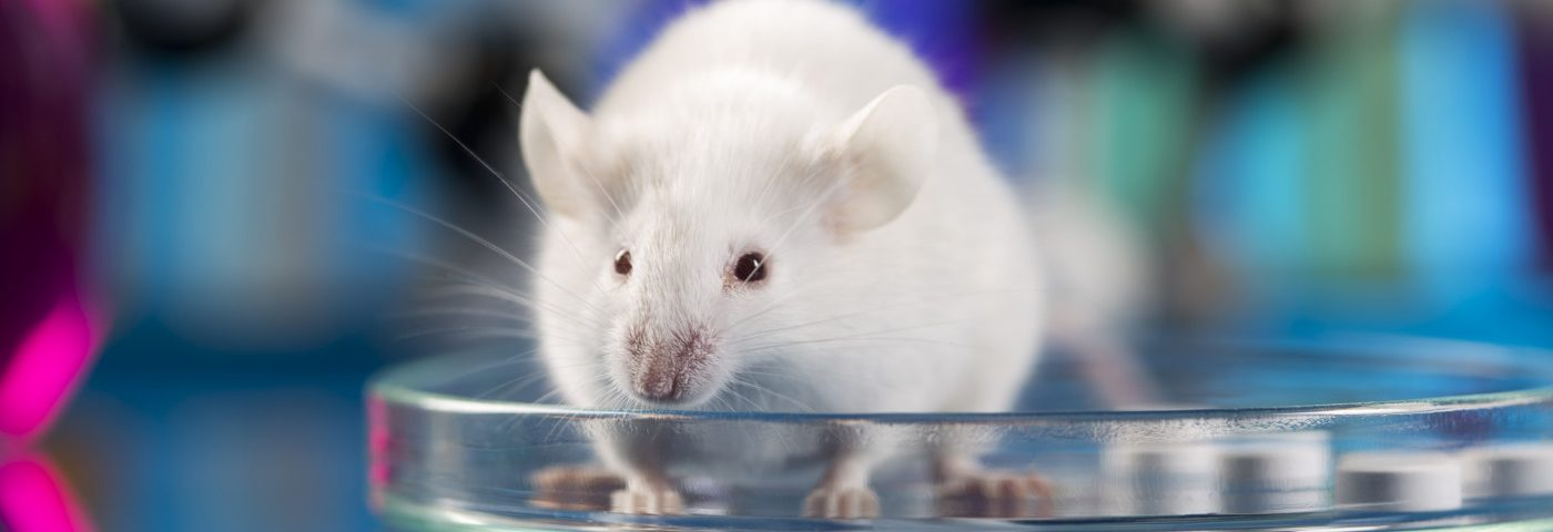 Scientists Discover Potential Therapeutic Target for CMT in Mouse Study